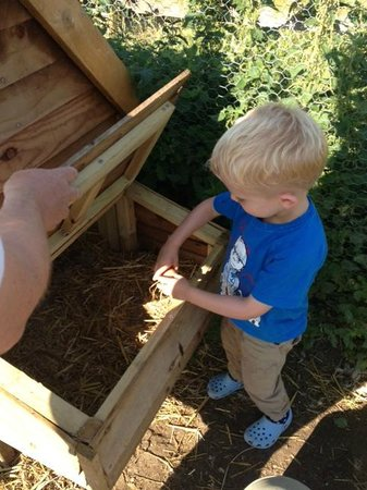 Bucks Farm Holiday Cottages: Collecting Eggs