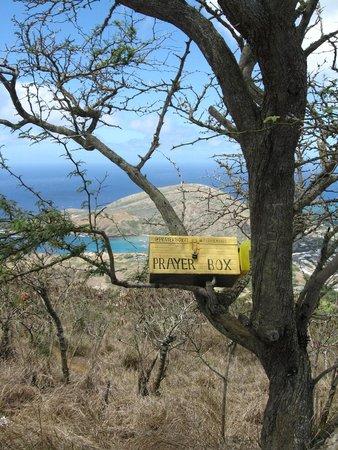 Koko Crater Trail: Koko head climb- wishes tree