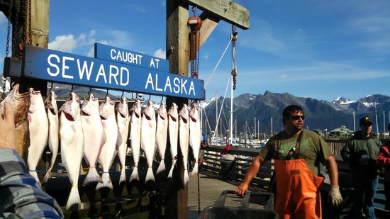 Lots of Action at Seward Boat Harbor