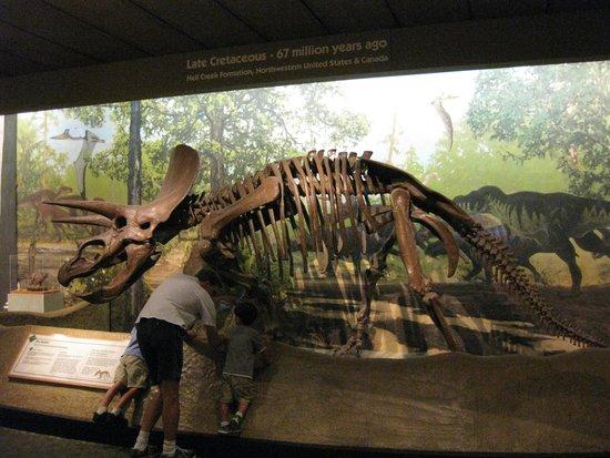 Museum of Science : dinosaurs!