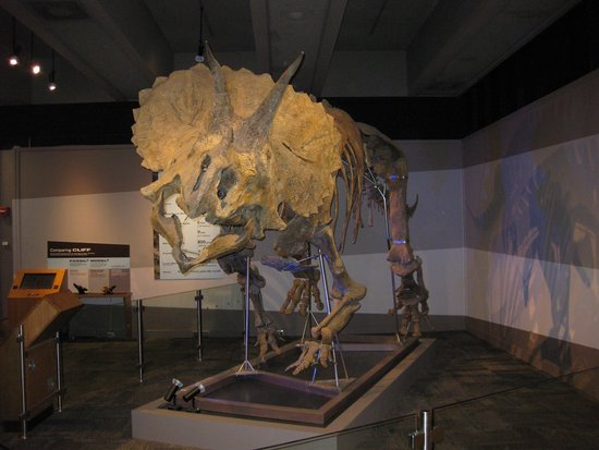 Museum of Science : Tricerotops