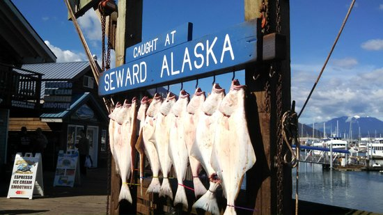 Halibut Catch of the Day in Seward Boat Harbor