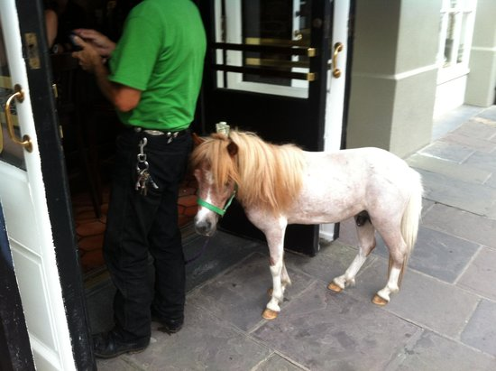 Place d'Armes Hotel: Man walks into a Bar with a horse....Bourbon Street