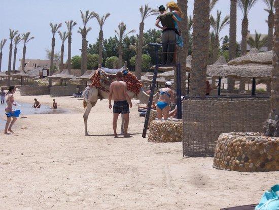 Elphistone Resort: In spiaggia col cammello