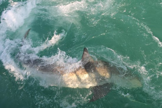 Sharklady Adventures: Even neat to see them from above