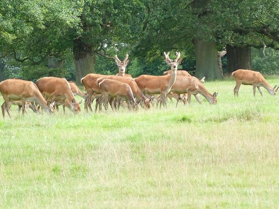 Woburn Abbey and Gardens: Deer on the grounds