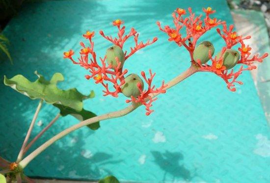 Paradisus Rio de Oro Resort & Spa: Stunning flora and fauna
