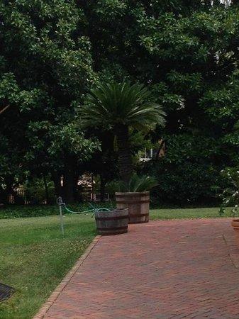 Tudor Place: 200 year old sago palm