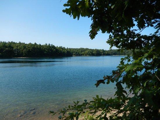 Walden Pond State Reservation : Walden Pond 8/8/2014