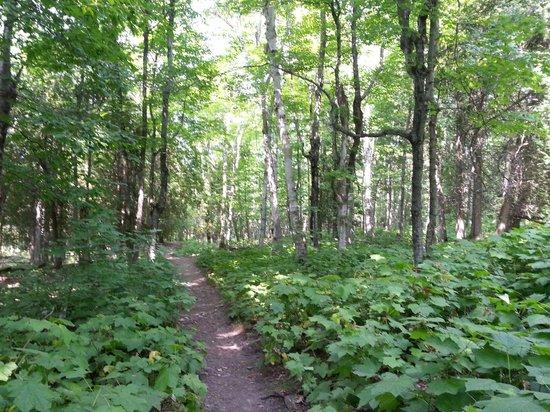 Eagle Trail : Muddy road