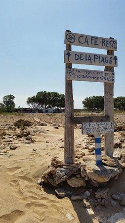 La Mouette et les Dromadaires : Vue de la plage