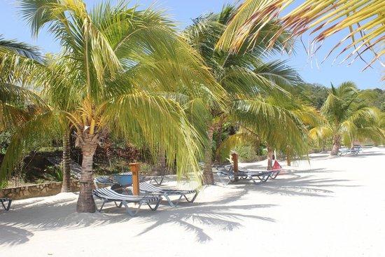 Turquoise Bay Dive & Beach Resort: .