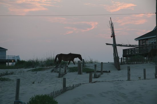 Wild Horse Adventure Tours: Sunset horse