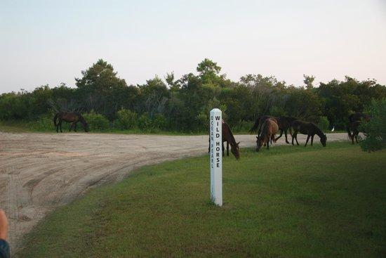 Wild Horse Adventure Tours: Wild Horse Road - cue the horses!