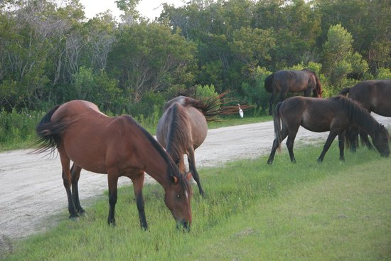 Wild Horse Adventure Tours: Group Shot