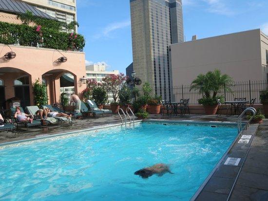 Hotel Monteleone : Rooftop pool area