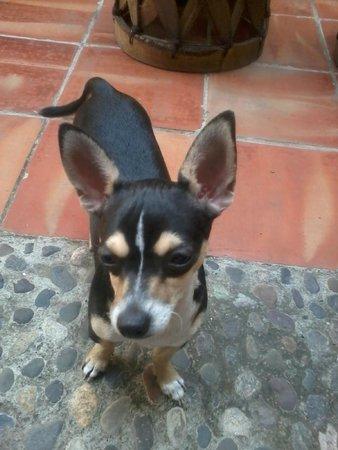 Olga Querida: La mascota de la casa,tambien amable y cariñosa