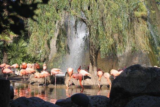 La Palmyre Zoo : Flamant rose