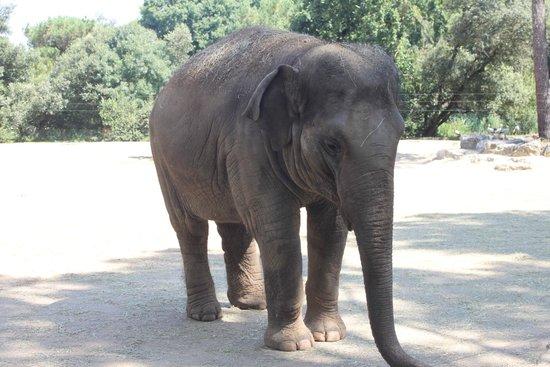 La Palmyre Zoo : Elephant