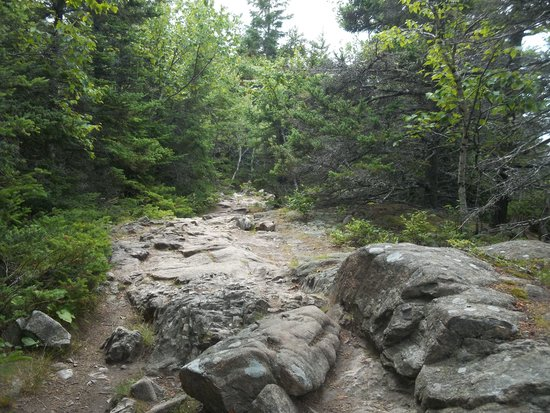 Great Head Trail: Rocky well worn trail