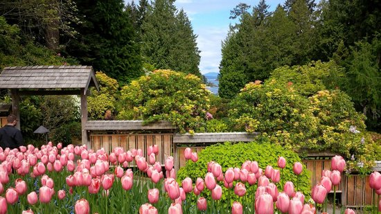 Butchart Gardens: Great season for tulips in May
