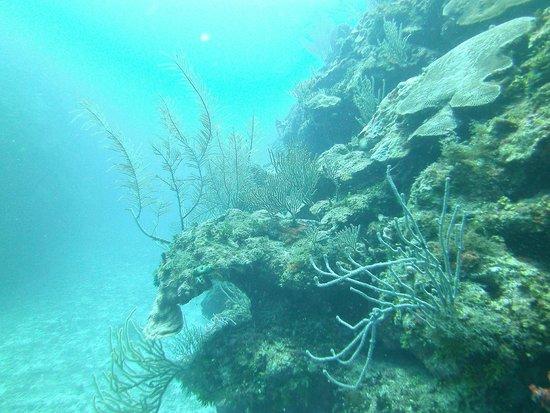 Ecologic Divers : Dive