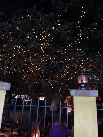 Bella Notte: Un bell'albero di ulivo finto in pieno stile americano!!������