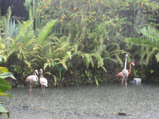 Paradisus Punta Cana Resort : lobby