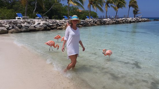 Renaissance Aruba Resort & Casino: Flamingo Beach