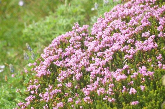 Mount Rainier : wild flowers