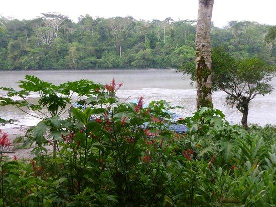 Cotococha Amazon Lodge: vista desde la cabaña de abajo