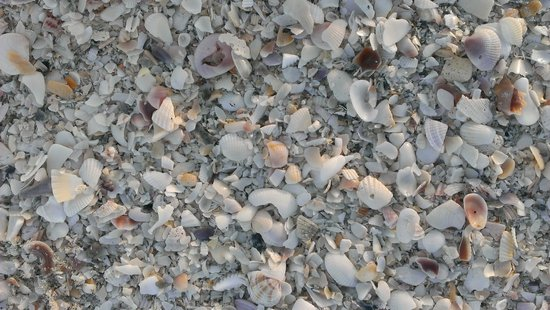 Sundial Beach Resort & Spa: A group of shells on the sand