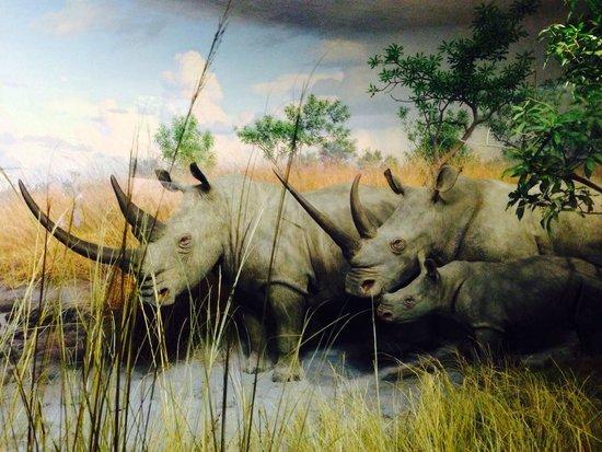 American Museum of Natural History : American muséum of natural history