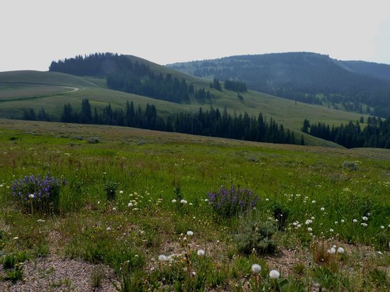 Bighorn National Forest: wildflowers and scenic vista