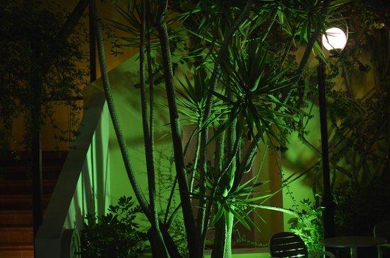 Latania: night view of pool area