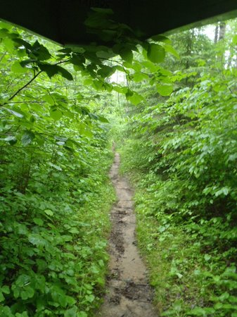 Boundary Waters Canoe Area Wilderness : Pine Portage, Quetico Provincial Park