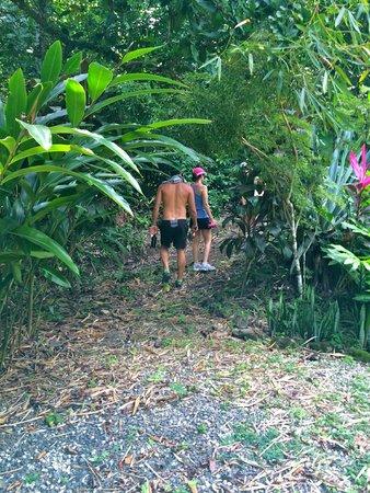 Star Mountain Jungle Lodge: Jungle Hike