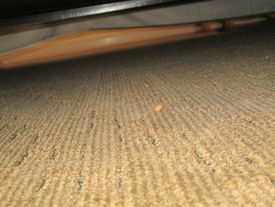 Lake Buena Vista Resort Village & Spa: crumbs under the bed
