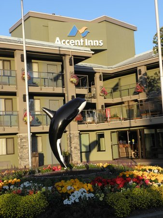 Accent Inn Victoria : Being greeted by an orca is fun