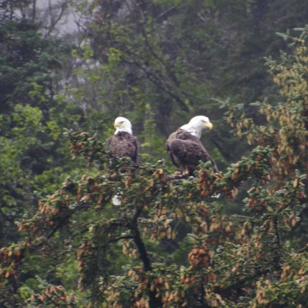 Kayak Adventures Worldwide: Double bald eagle action
