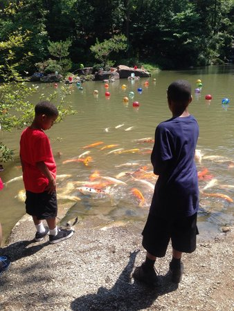 Garvan Woodland Gardens : Feeding fish