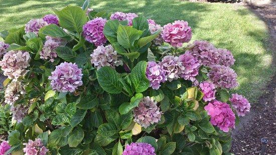 Mission San Luis Obispo de Tolosa: Flowers on grounds