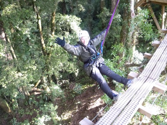 Rotorua Canopy Tours: Freedom above the Forest