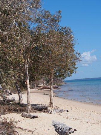 Kingfisher Bay Resort : Beach in front of the resort