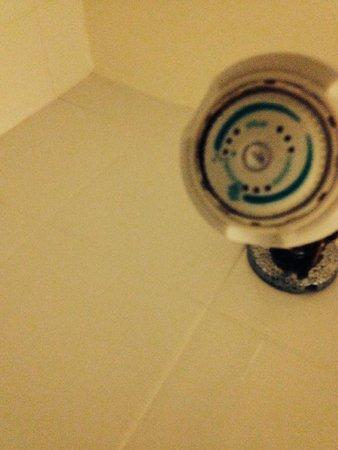 International Palms Resort & Conference Center: shower head