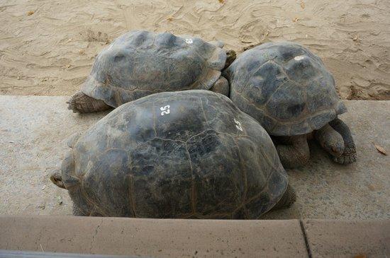 San Diego Zoo: 140+ year old Galapogose tortoises