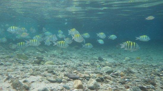 Spencer Ambrose Tours: Fish