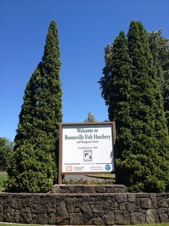 Columbia River Gorge National Scenic Area: Bonneville Fish Hatchery
