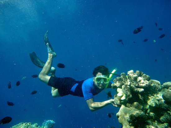 Bunaken National Marine Park: berfoto dengan batu karang dan ikan