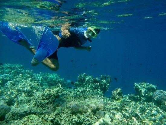 Bunaken National Marine Park: snorkeling